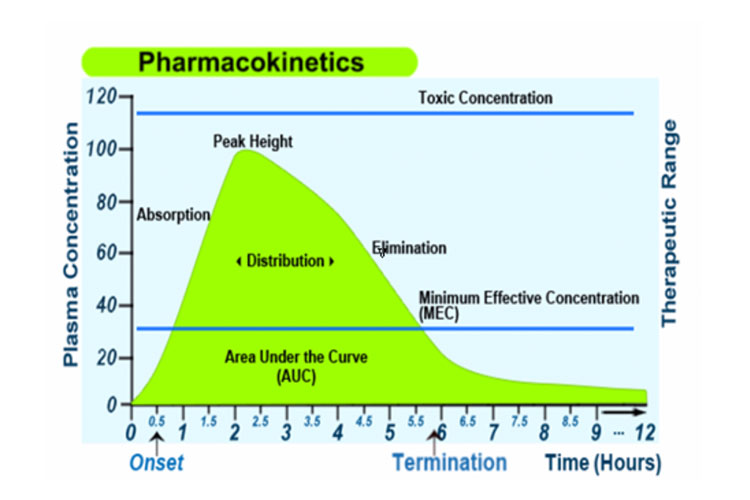 Graph - Pharmacokinetics and Pharmacodynamics - Medicines and the Body