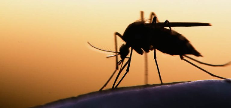 Image for What is Dengue? - Mosquito Transmitted Diseases