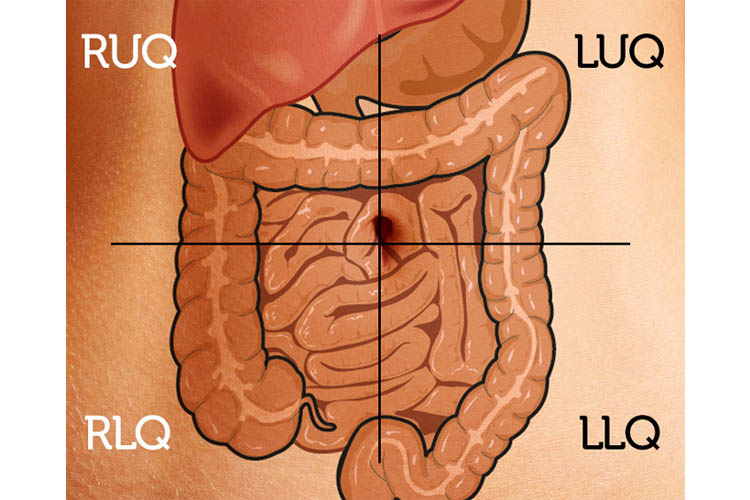 bowel sounds abdomen diagram