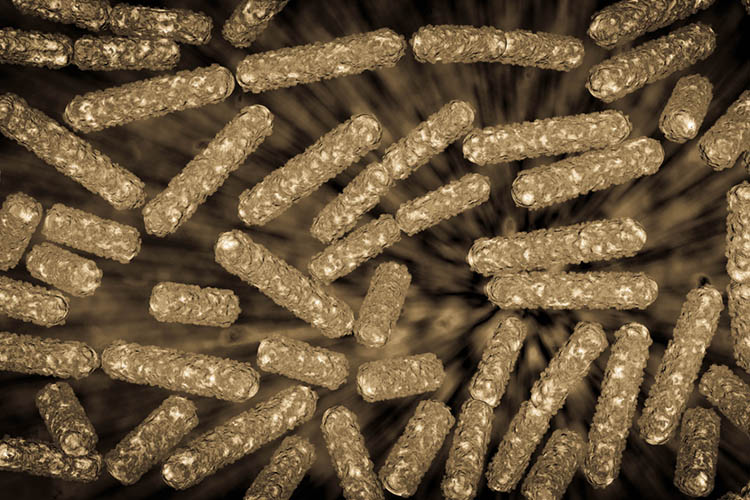 Human Gut Microbiome Explained