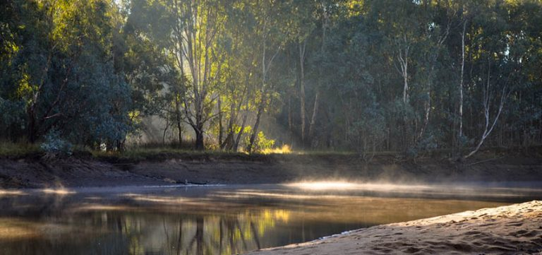 Image for Barmah Forest Virus Infection