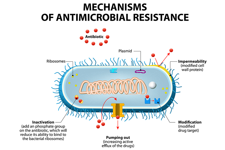 antibiotic resistance diagram