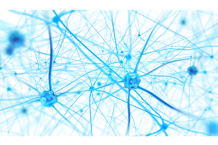 Exercise-Induced Neuroplasticity - Creating New Neural Pathways neurons