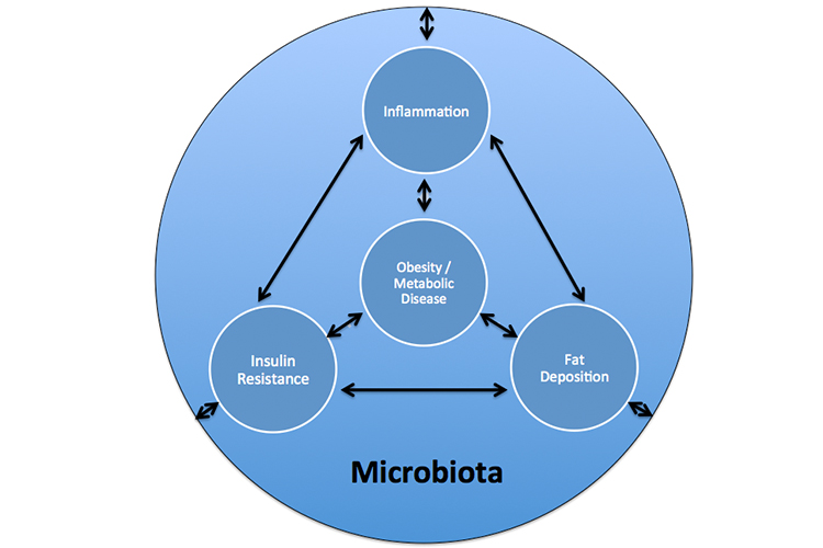 Gut Microbiota Health and Wellbeing