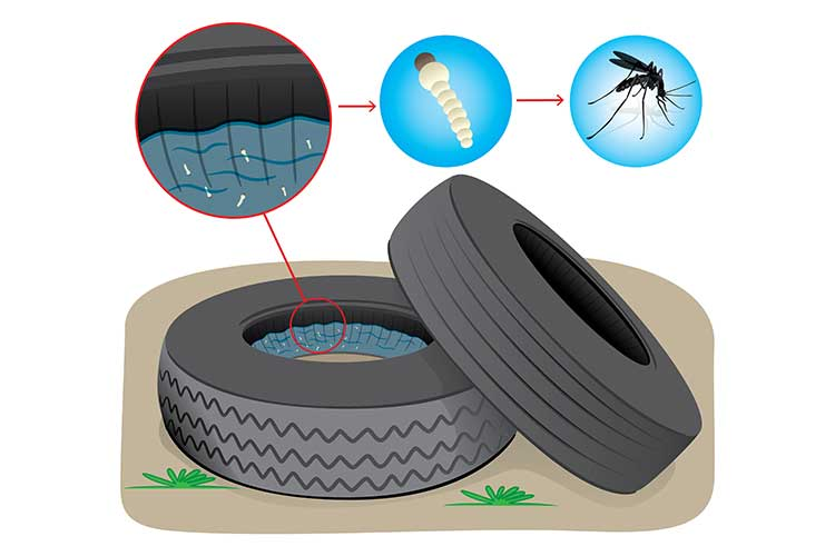 Mosquito-Borne Disease Prevention - Ausmed Limiting mosquito breeding habitats - larval source management LSM
