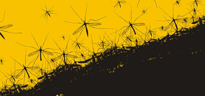 Cover image for article: Mosquito-Borne Disease Prevention