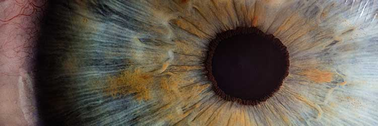 Close up eye - eye assessment concept   Image
